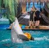 Дельфинарии, океанариумы в Балашихе